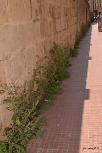 Corso Umberto invaso dalle erbacce (10)