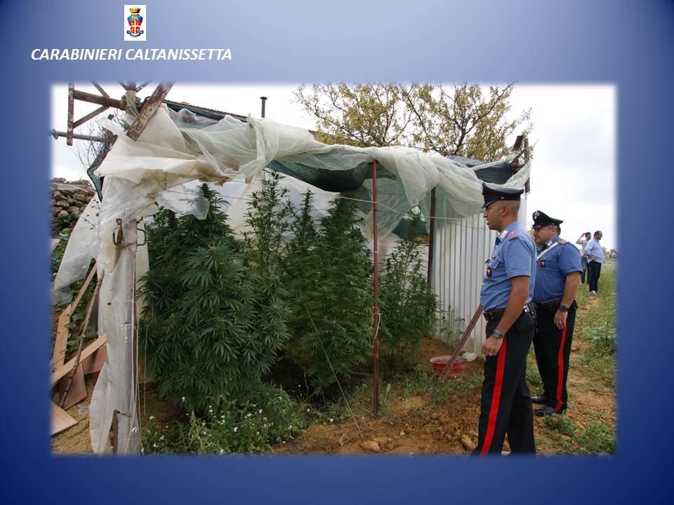 Arrestati due fratelli sancataldesi mentre innaffiavano le - Fratelli ingegnoli piante ...