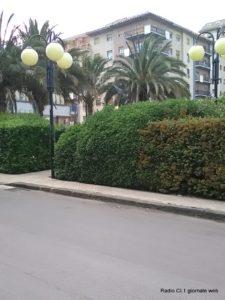 Le siepi di piazza Falcone e Borsellino (1)