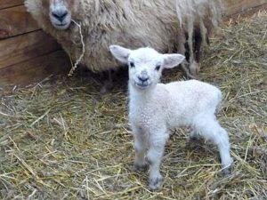 agnelli-e-capretti