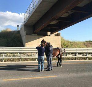 polizia cavallo 2